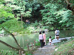 Pond (two ponds) of Ryuki of green leaves