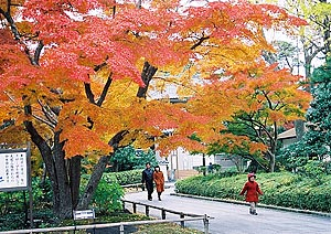 Colored leaves of the Mt. Narita