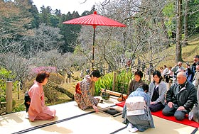 """An outdoor tea ceremony"" of the plum Festival"