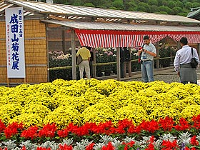 State 03 of the Mt. Narita Naritasan Shinshoji Temple Chrysanthemum Exhibition