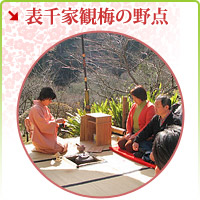 outdoor tea ceremony ของ enjoying ume blossom นักตาราง 1000