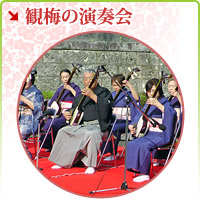 Concert of the enjoying ume blossom